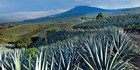 Guadalajara - Tequila, Xolos & Day of the Dead Tour boletos