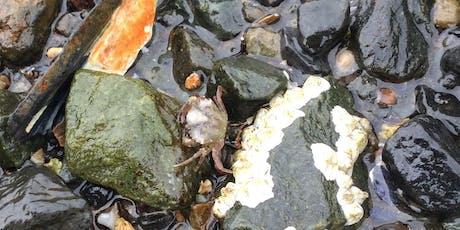 Urban Nature Walk on Dalhousie Studley Campus- Intertidal Organisms tickets