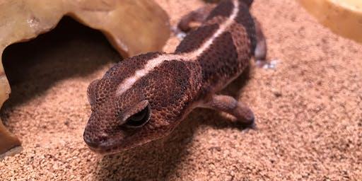 Homeschool (K-5) Field Trip: Newts, Toads, and Geckos—Oh My!