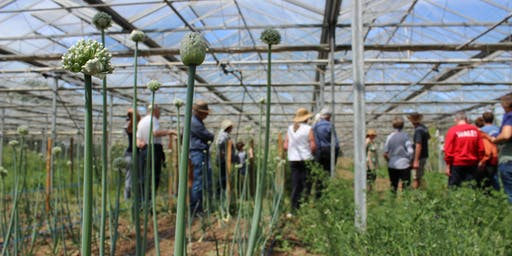 Seed Cooperative Open Day September 2019