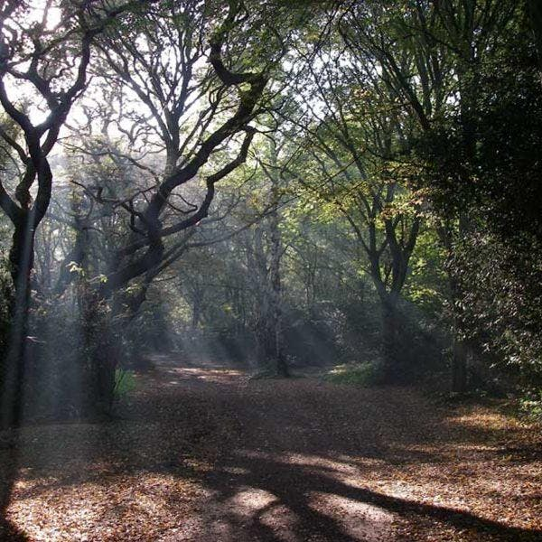 Hainault Forest Family Friendly Adventures