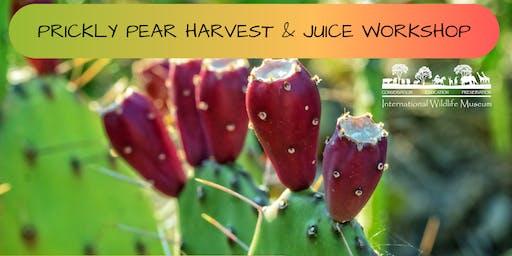 Prickly Pear Harvest & Juice Workshop