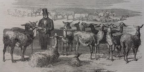 Mr Gee's Llamas in Acton - Linda Davies tickets