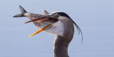 Be our guest at a Coastal Camera Club meeting in Lewes Delaware.