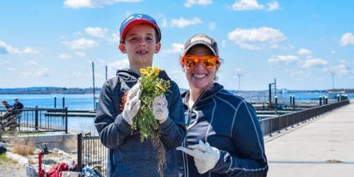 Boston Harbor Islands: Innovators Volunteer Opportunity