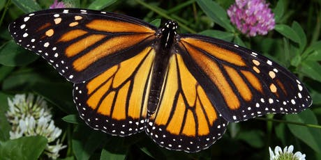 Monarch Butterflies: A Royal Journey tickets