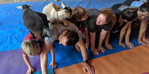 Goat Yoga At Nadeau Farm