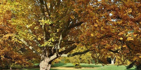 Friends of Goodale Park Fall Tree Tour tickets
