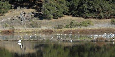 North Bay: Ducks Galore at Cemetery Marsh