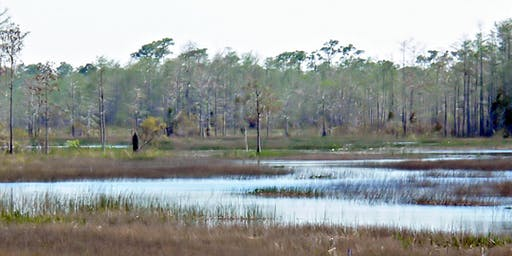 Grassy Waters Preserve (Sunset Canoe Fly-in) Thu Nov 07 2019
