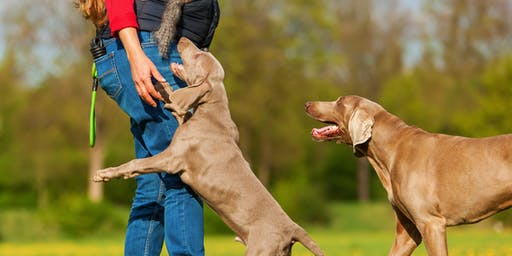 The Dog Behavior Problem Solver Workshop