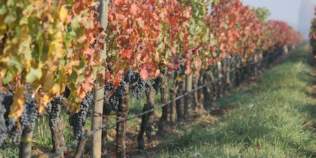 Weekly Wine Tasting of Sebastian de Martino wines from Chile tickets