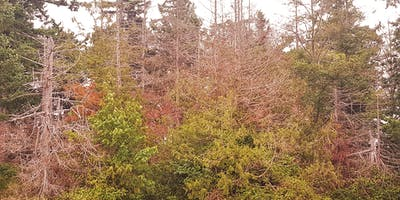 Climate Adaptation Strategies for Pacific Northwest Forests (Olympia)