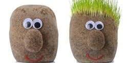Grass Heads - Ballan