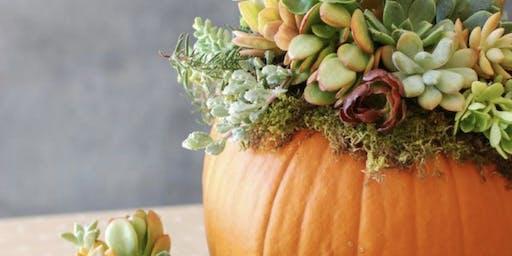 Fall Time Succulent Pumpkins Workshop