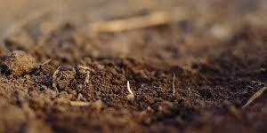 Home Education Activity - The Nature of Soil