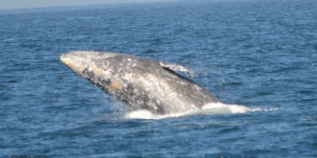 Saving the Gray Whale tickets
