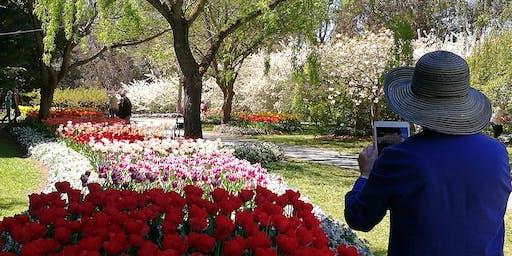 Tulip Top Garden + Floriade Canberra 1 day tours