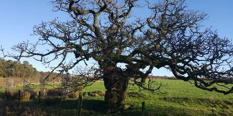 Festival Bowland : Ancient Tree Forum - Our Landmark Trees tickets
