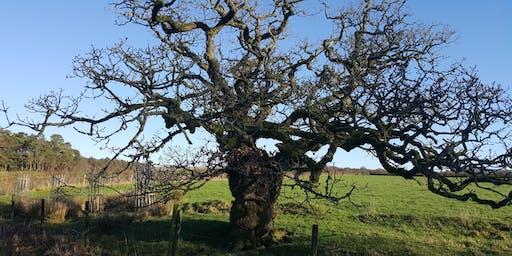 Festival Bowland : Ancient Tree Forum - Our Landmark Trees