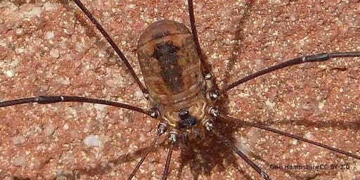 Harvestmen Identification