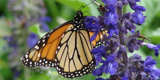 Brown-bag Gardening Series: Plants for Butterflies and Bees