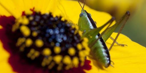 Brown-bag Gardening Series: What's that Bug?