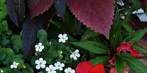 Brown-bag Gardening Series: Thrifty Landscaping