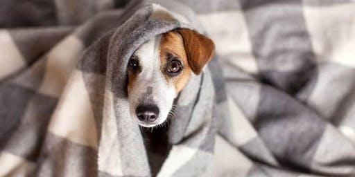 Volunteer - Fleece Blankets for Rescue Dogs