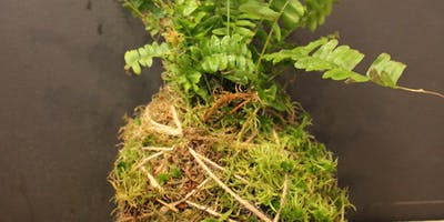 Kokedama workshop - the art of mossballs