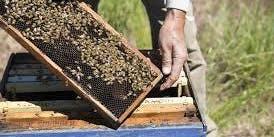 Honeybee Hive Tour