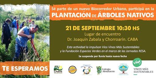 PLANTACIÓN DE ARBOLES NATIVOS - Jornada de Voluntariado Socioambiental -