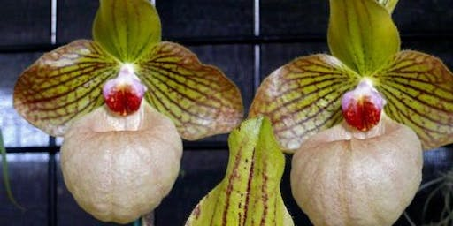 Annual Orchid Auction