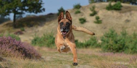 2019 Bark in the Park 5K - Humane Society of Uvalde tickets