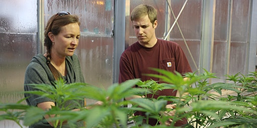 Study the Science of Cannabis & Plant Biology at UVM Webinar
