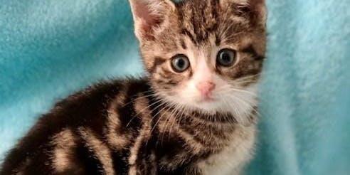 11:30 am Kitten-palooza!