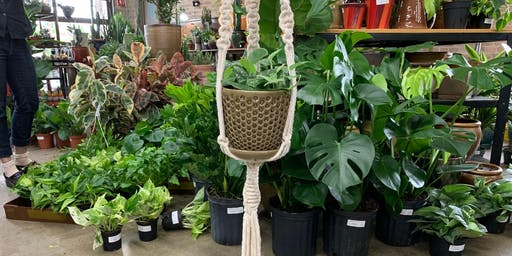 Make a Macrame Plant Holder