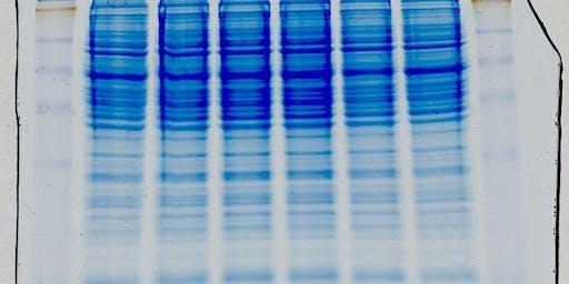 Lab Skills Night: Protein Gels