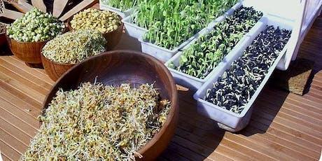 Germination et lacto-fermentation (Cours 174) billets