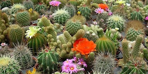 Cactus Garden Workshop
