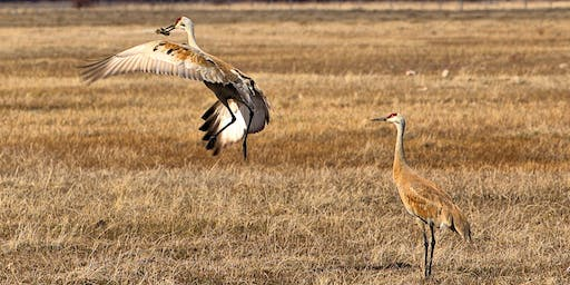 2019 Greater Yellowstone Crane Festival Keynote Address and Film Screening