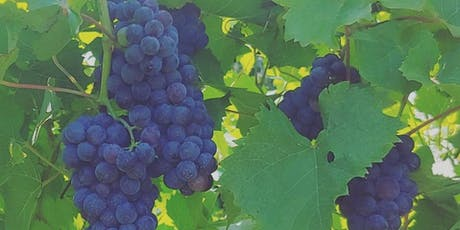 Be a part of the harvest at Bishop Estate Vineyard and Winery tickets