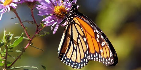 Butterflies in Your Garden- Butterfly Conservation of SA tickets