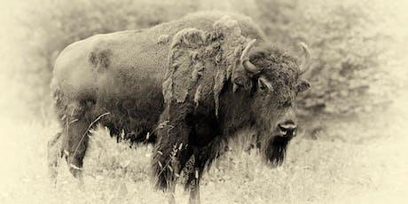 Bison Bison 20 Year Anniversary Party! tickets