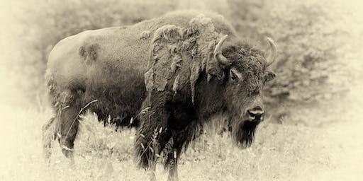 Bison Bison 20 Year Anniversary Party!