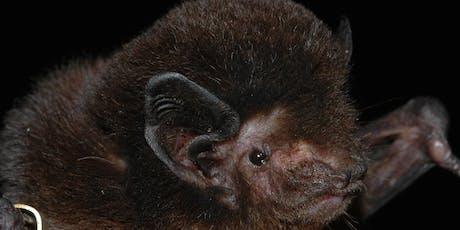 Bat Workshop tickets