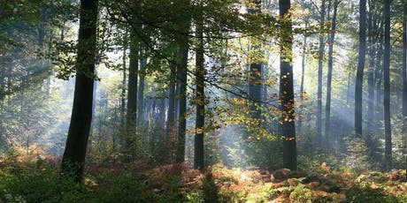 25km South of Leuven in beautiful forests tickets