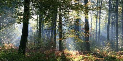 25km South of Leuven in beautiful forests