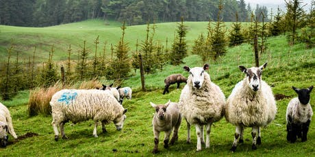 Making Woodland Work for You: Exploring forestry opportunities on farm tickets