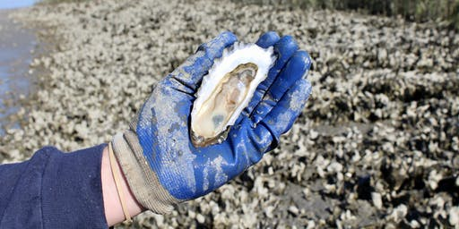 Exploring South Carolina's Oysters